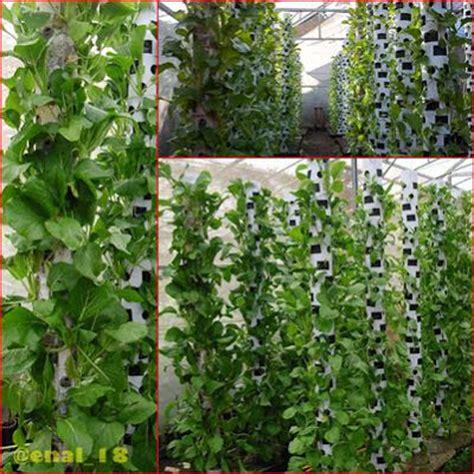 Jual Pupuk Kompos Hidroponik teknis budidaya tanaman sawi kebun organik