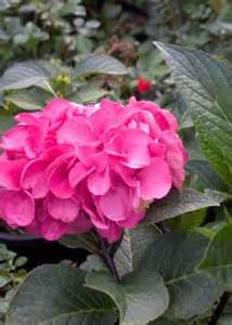 why are flowers brightly colored 1000 images about flowering shrubs on shrubs