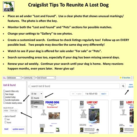 craigslist florida cities lost dogs florida