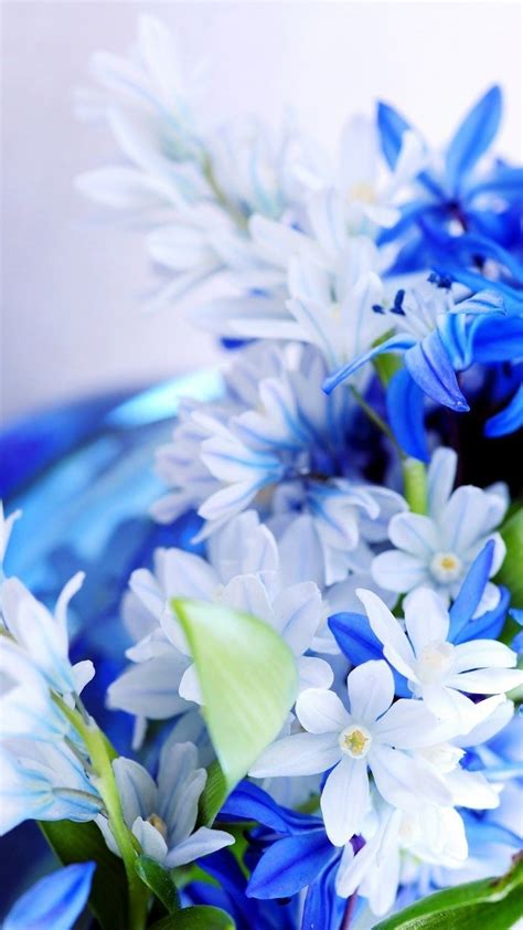 blue white flowers wallpaper iphone   iphone wallpaper