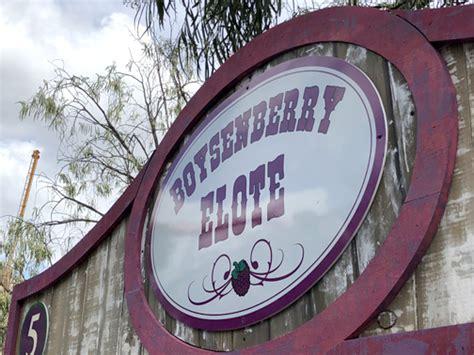 Bd Paper Boysenberry 2 72mx11m knott s boysenberry festival crescenta valley weekly