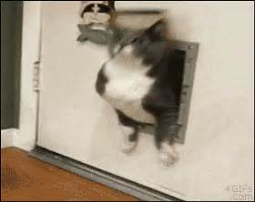 Door Gif by Cat Stuck In Door Pictures Photos And Images For