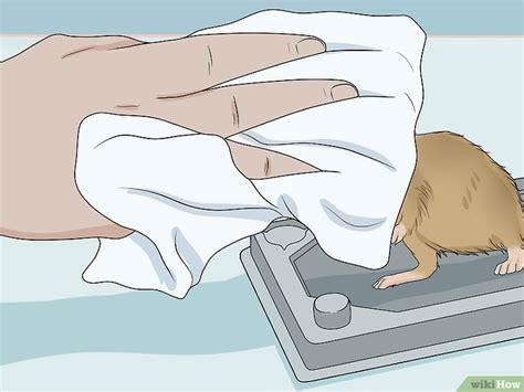 melepaskan tikus hidup  perangkap lem wikihow
