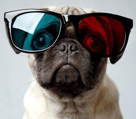 goggles for pugs 130 best images about 3d on