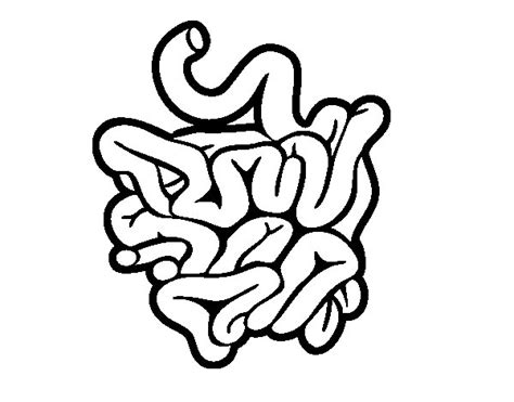 Small Intestine Drawing