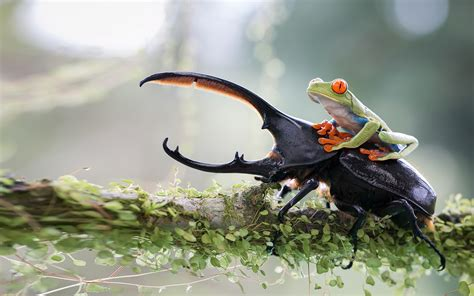 nature animals green frog  red eyes insect deer branch