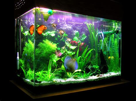 beautiful home fish tanks decorate your living room with beautiful fish aquarium