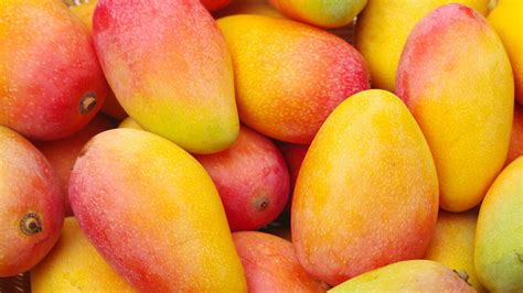 what color is a ripe mango how to a ripe mango healthination