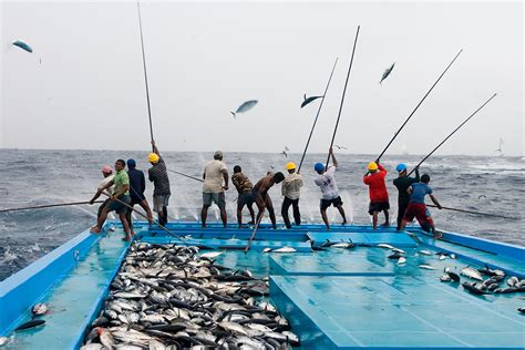 why use on fishing line sustainable tuna fishing is bad for climate here s why