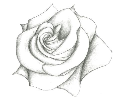 rose coloring pages easy rose simple pencil drawing simple close up drawings