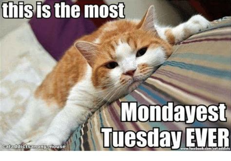 meme tuesday this is the most monday est tuesday cataddictsamony