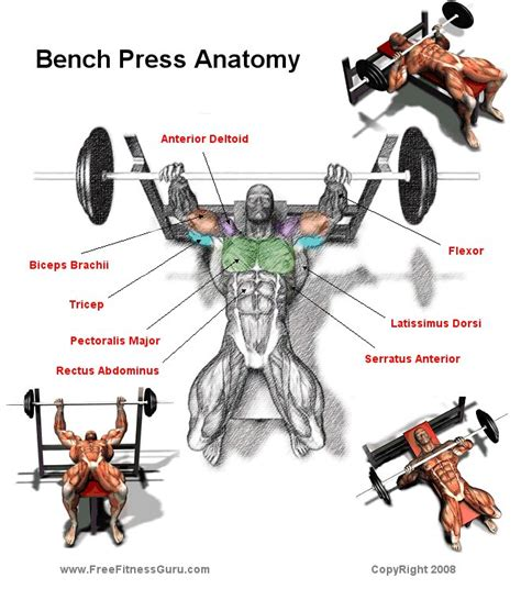 bench press power chart the best exercises to include in your muscle building