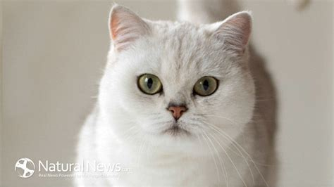 is food bad for cats 5 reasons to throw out your cat food it s bad for your cat