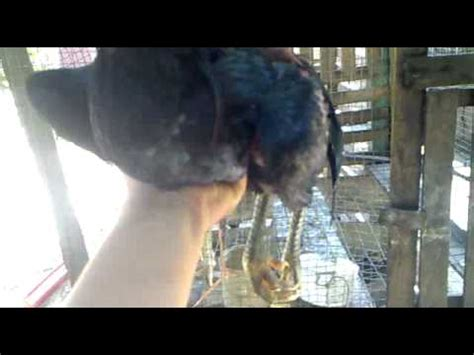 Obat Mata Pada Ayam Tetes Mata kumpulan obat untuk ayam sakit doovi