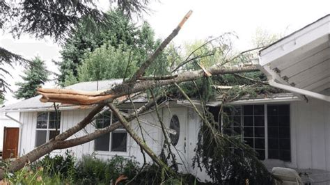 Needs Damage by Emergency Tree Removal Service In Wilmington Stein Tree