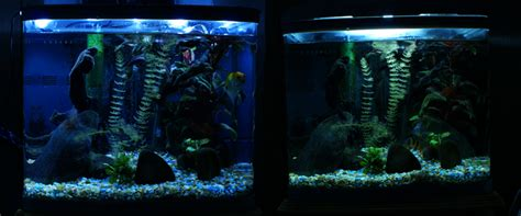 led lights good for aquarium plants led and t2 aquarium lights including reef and planted