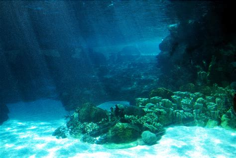 Sea Floor by Big Myrtle S Tea Shoppe And Egg Emporium Of Ghost Towns