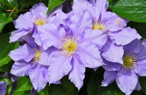 curarsi con i fiori di bach i fiori di bach curarsi con l energia della natura cure
