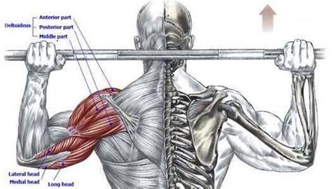 shoulder press diagram the neck shoulder press diagrams fitness