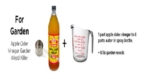 Thc Detox For Management by Apple Cider Vinegar Detox Thc Bloodsugardiabetes Org