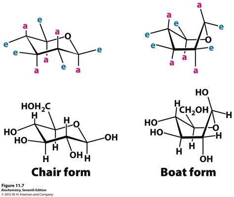 Chair Conformation by Kevin Ahern S Biochemistry Bb 450 550 At Oregon State