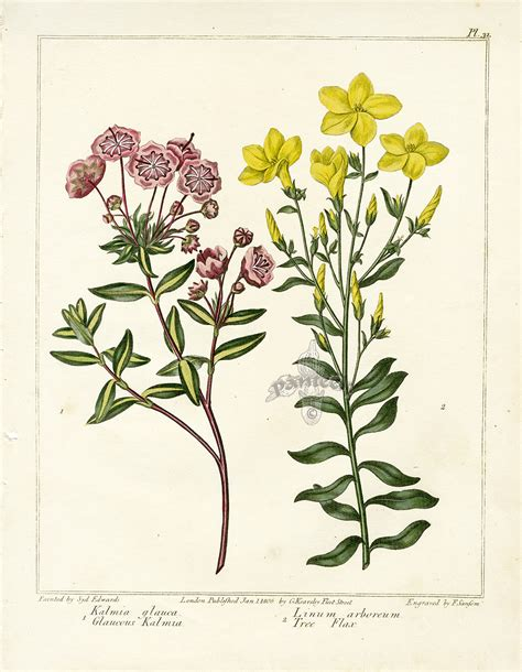 botanical print botanical prints pinterest