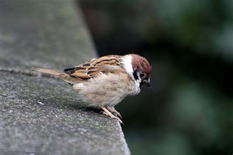 file small bird in meiji shrine jpg wikimedia commons