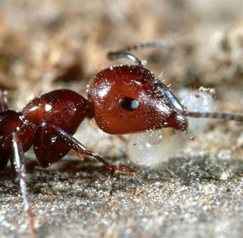Ameisen Im Wohnzimmer Was Tun by Ameisen Im Wohnzimmer