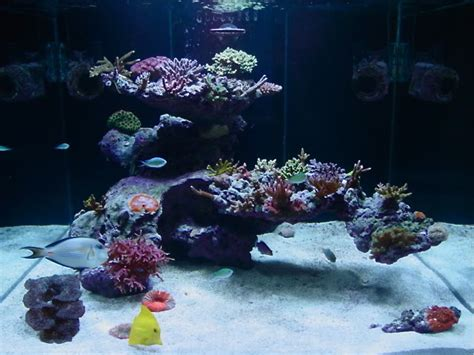 Aquascape Reef by Reefscape Uncertainty Aquascaping Forum Nano Reef