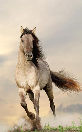 caballos fondos animados android market