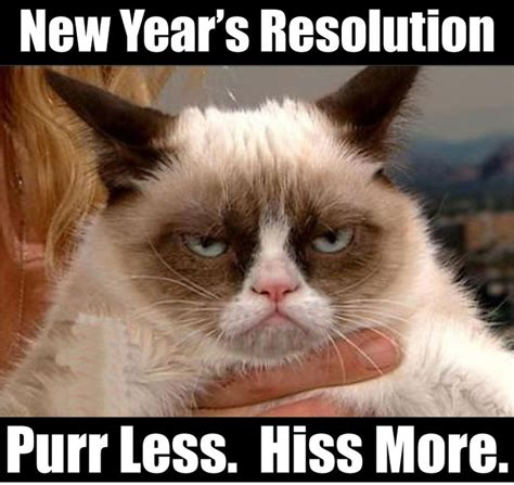 New Cat Memes - new year s resolution pure less hiss more grumpy cat