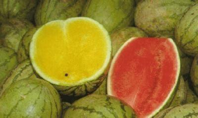 buah buahan tempatan