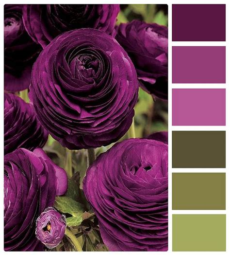 the color plum purple and green more of the plum color plum and