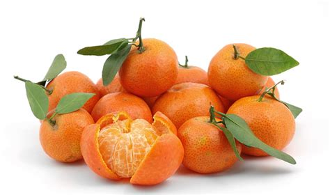 new year lucky oranges new year 101 year of the sheep shut up and eat