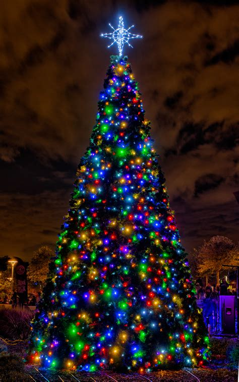different ways to light a christmas tree different types trees images