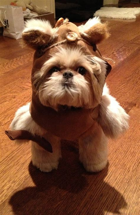 ewok costume for fab the best costumes