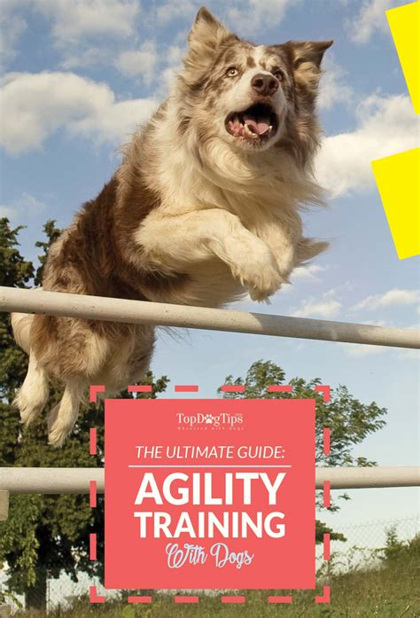 agility for dogs agility for dogs the ultimate beginners guide