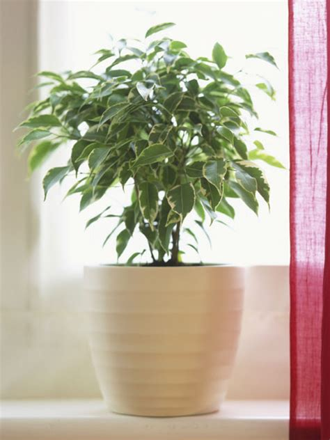 easy indoor plants 5 easy indoor plants to start with indoor gardening