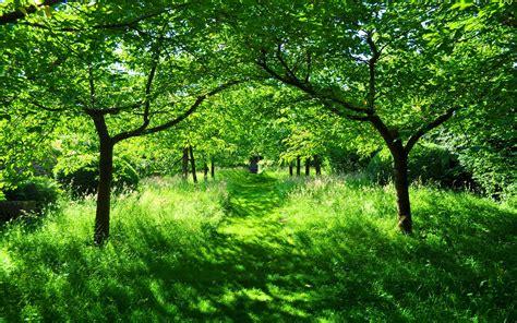 summer gardening summer garden green grass 7032979 summer