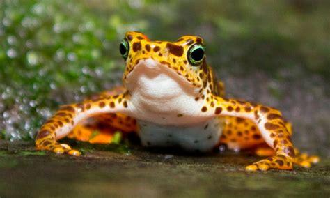 imagenes relajantes de animales las mejores fotos de animales raros im 225 genes raras