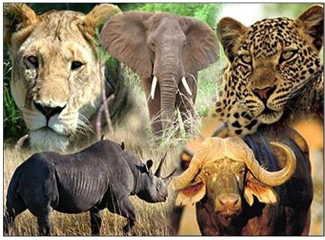 Big Picture Post Nation 5 by Best 5 Safaris