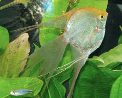 Lu Akuarium Kecil smart ebook budidaya ikan manfish fish
