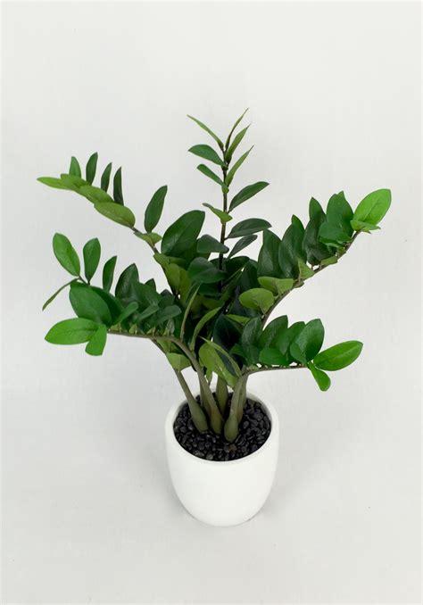 best indoor hanging plants low light best indoor hanging plants low light 28 images low