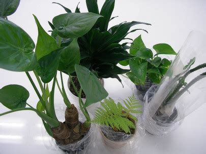 nasas top  air cleaning plants pollution solutions