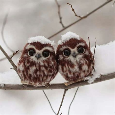 106 best images about curiosity of an owl on pinterest