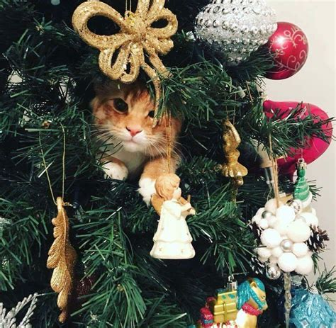 protect christmas tree from cat it s probably late but here s how to protect your tree from your cat metro news