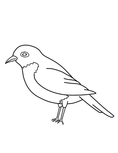 american robin coloring page american robin coloring download american robin coloring