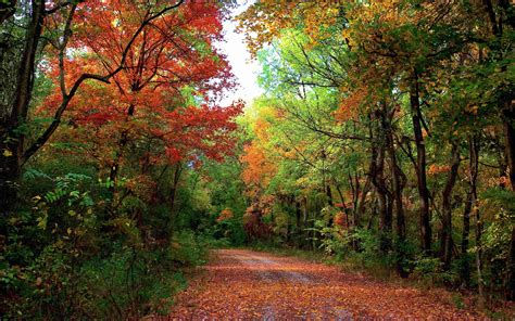 autumn forest road trees landscape wallpaper