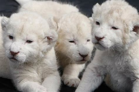 google images animals cute baby animals pictures android apps on google play
