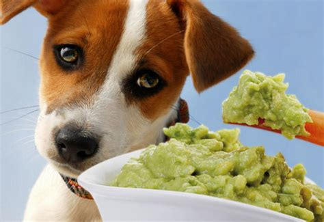 is cat food bad for dogs list of foods that are bad for your
